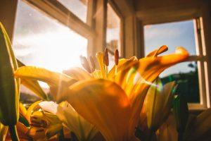 ramen poetsen zomer
